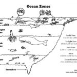 Ocean Layers (Elementary Level)