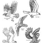 Birds Of Prey (Vertical View)