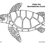 Sea Turtle (Hawkbill) Coloring Page