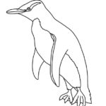 Penguin (Yellow-eyed) Penguin
