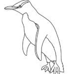 Penguin (Yellow-eyed) Penguin