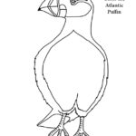 Puffin (Atlantic) Coloring Page
