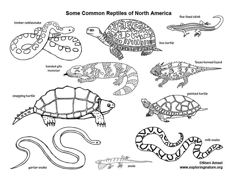 Reptiles of North America Coloring Nature