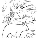 Carnivores of the Deciduous Forest