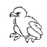 Eaglet (Bald Eagle Hatchling)