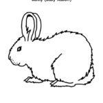 Bunny (Cottontail Rabbit Kit)