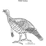 Wild Turkey (Alone)