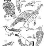 Winter Birds of the North