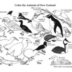 New Zealand Animals