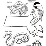 massachusetts state symbols coloring pages - photo#5