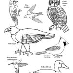 New York State Birds