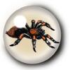 Spiders & Scorpions