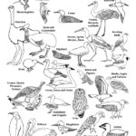 Bird of the World